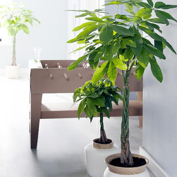 vente privée plantes