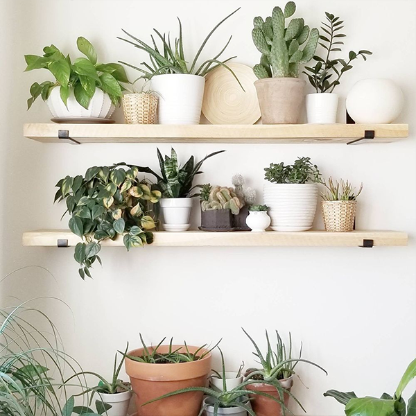 plantes déco pas cher